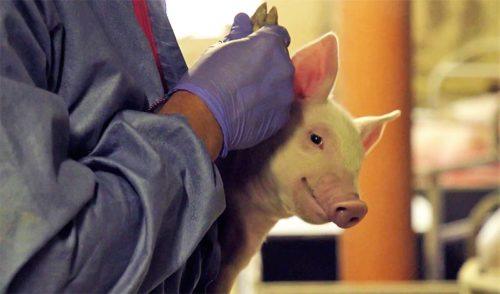 Jobs und Stellenangrebote in der Tiermedizin