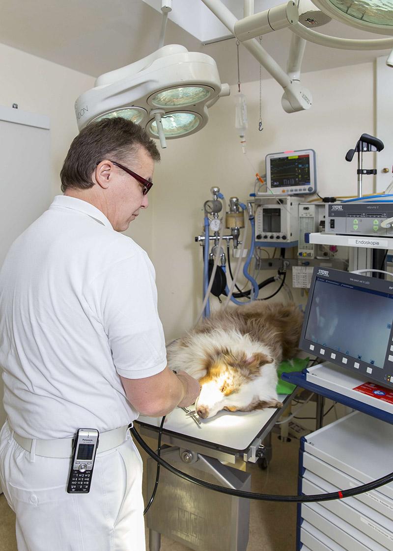 Jobs in der Tiermedizin