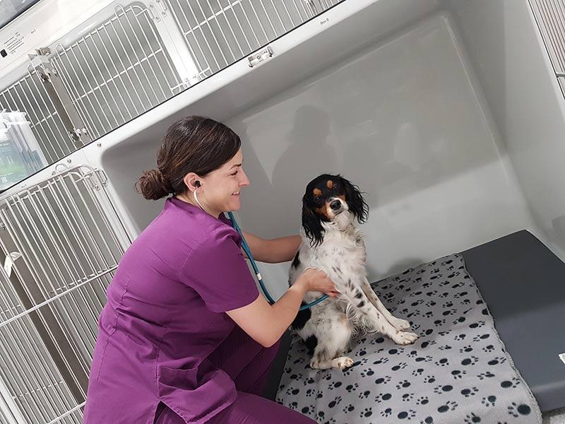 bei vetjobs24 finden Sie die richtigen Stellenangebote und Jobs für die Veterinärmedizin