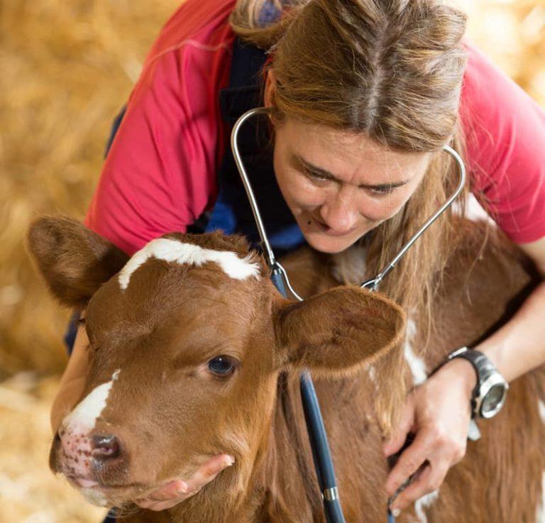 Stellenangebote als Tierarzt - nicht nur für Kleintiere